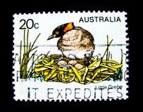 Un bollo stampato in Australia mostra un'immagine dell'uccello del tuffetto sul valore al centesimo 20 Fotografia Stock