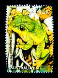 Un bollo stampato in Australia mostra un'immagine della rana di albero magnifica sul valore al centesimo 45 Immagine Stock
