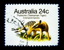 Un bollo stampato in Australia mostra un'immagine della tigre tasmaniana del Thylacine sul valore a 24 centesimi Fotografia Stock Libera da Diritti