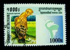 Un bollo stampato in Cambogia mostra un'immagine dell'uccello del Rupicola Fotografia Stock