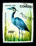 Un bollo stampato nel Congo mostra un'immagine dell'uccello dell'airone di Melanocephala dell'ardea Immagine Stock Libera da Diritti