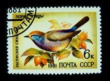 Un bollo stampato in Russia mostra un'immagine di bello disegno dell'uccello Fotografia Stock Libera da Diritti