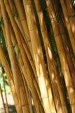 Un bon nombre de cheminées en bambou se ferment ensemble Photo stock
