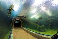 Un bon nombre de créatures sous-marines de mer Photographie stock libre de droits