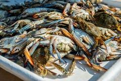 Un bon nombre de crabes images libres de droits