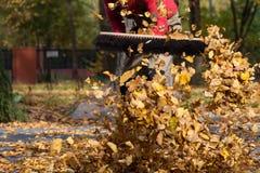 Un bon nombre de feuilles dans un jardin Photos stock
