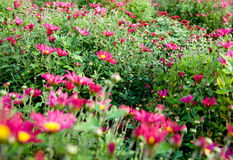Un bon nombre de fleurs Image libre de droits