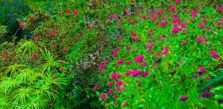Un bon nombre de fleurs pourprées Photos stock