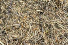 Un bon nombre de fourmis Images libres de droits