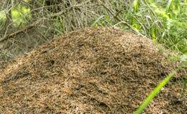 Un bon nombre de fourmis Image libre de droits