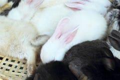 Un bon nombre de lapins de mignon en vente Photo stock