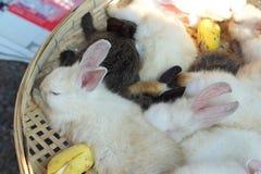 Un bon nombre de lapins de mignon en vente Photos libres de droits