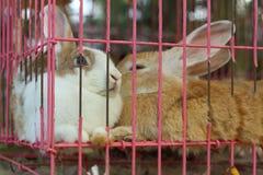 Un bon nombre de lapins de mignon en vente au marché Photographie stock