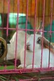 Un bon nombre de lapins de mignon en vente au marché Image libre de droits