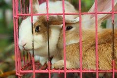 Un bon nombre de lapins de mignon en vente au marché Photos libres de droits