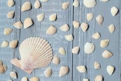 Un bon nombre de petits coquillages sur le fond en bois clair images libres de droits