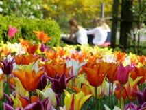 Un bon nombre de tulipes photos stock