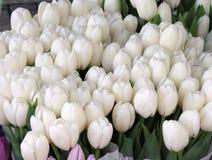 Un bon nombre de tulipes blanches à un marché Images stock