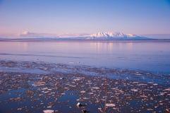 Un bon nombre grands-angulaires de dame de sommeil de volcans de l'Alaska de glace image stock