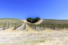 Un bosco ceduo degli alberi forma una forma del cuore sulle colline sceniche Immagine Stock