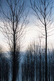 Un bosque Imagen de archivo