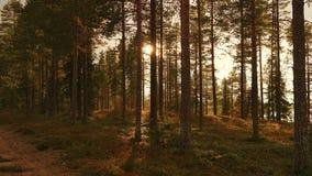 Un bosque Foto de archivo libre de regalías