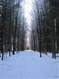 Un bosque Fotografía de archivo libre de regalías