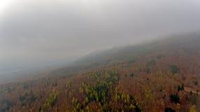 Un bosque coloreado otoño del pino se siluetea contra un fondo nublado, brumoso de colinas y montañas imagen de archivo