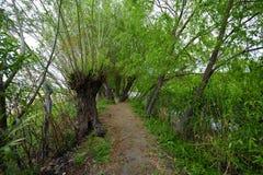 Un bosque con los árboles en la naturaleza cerca del río y del lago en la naturaleza foto de archivo