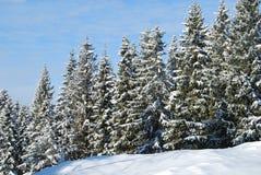 Un bosque del invierno Foto de archivo