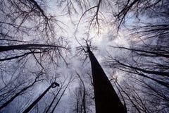 Un bosque del invierno Fotografía de archivo
