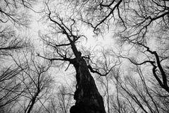 Un bosque del invierno Fotos de archivo libres de regalías