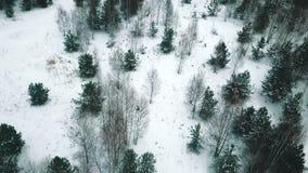 Un bosque del invierno una descripción del abejón del helicóptero metrajes
