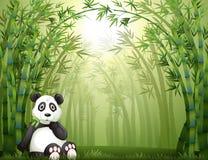 Un bosque del oso y del bambú de panda Imagen de archivo