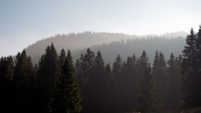 Un bosque del pino se siluetea contra un fondo nublado, brumoso de colinas y montañas imagen de archivo