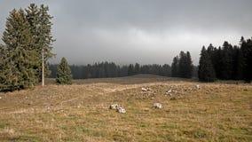 Un bosque del pino se siluetea contra un fondo nublado, brumoso de colinas y montañas imagen de archivo libre de regalías