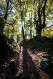 Un bosque del roble en el país basque imágenes de archivo libres de regalías