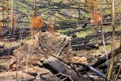 Un bosque después de un fuego que devasta en Canadá septentrional imágenes de archivo libres de regalías