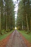 Un bosque en otoño fotografía de archivo