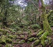 Un bosque encantado fotos de archivo