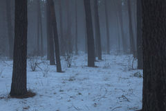 Un bosque frío del invierno melancólico, niebla Imagen de archivo libre de regalías