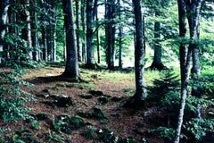 Un bosque hermoso con los colores de la primavera imagenes de archivo