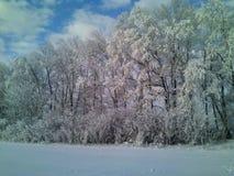 Un bosque hermoso en invierno Imágenes de archivo libres de regalías