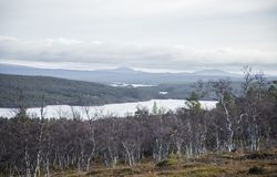 Un bosque hermoso en una ladera Paisaje de madera del otoño en las montañas noruegas Fotos de archivo