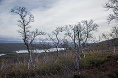 Un bosque hermoso en una ladera Paisaje de madera del otoño en las montañas noruegas Imagenes de archivo