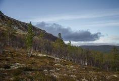 Un bosque hermoso en una ladera Paisaje de madera del otoño en las montañas noruegas Fotos de archivo libres de regalías