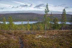 Un bosque hermoso en una ladera Paisaje de madera del otoño en las montañas noruegas Foto de archivo libre de regalías
