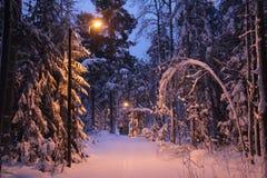 Un bosque nevoso de la Navidad imágenes de archivo libres de regalías