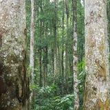 Un bosque tranquilo en Bali con tanto la belleza que se capturará sido los árboles en el nivel del ojo fotografía de archivo libre de regalías
