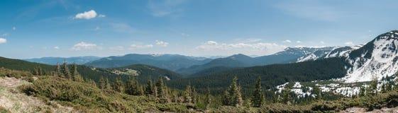 Un bosque verde grande en las montañas, rodeadas por las altas montañas en la nieve y un cielo hermoso en un día de verano Cárpat Imagen de archivo libre de regalías